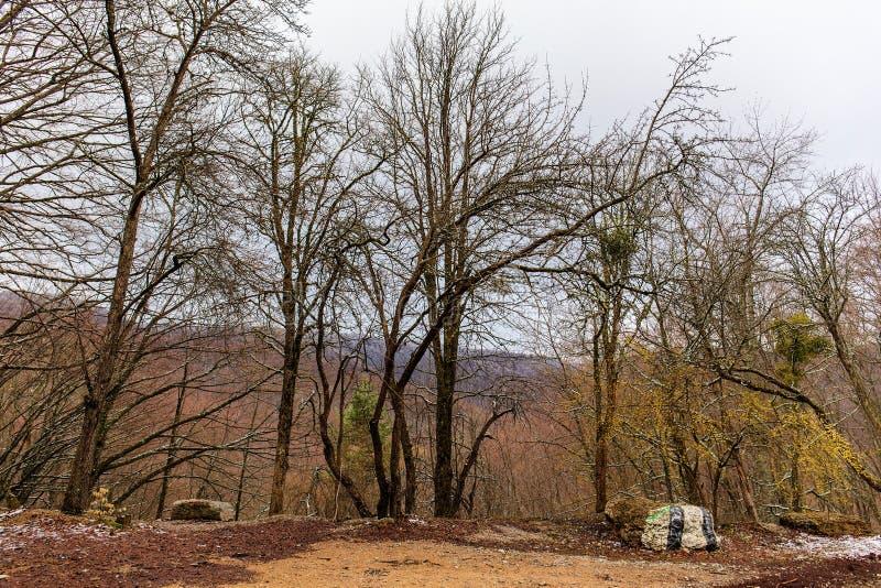 Paesaggio della primavera in montagna immagine stock