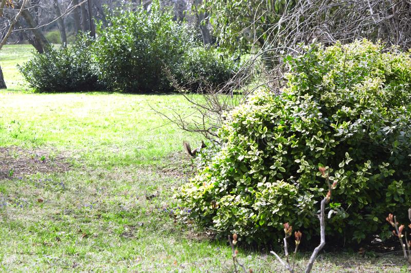 Paesaggio della primavera nel parco fotografia stock libera da diritti