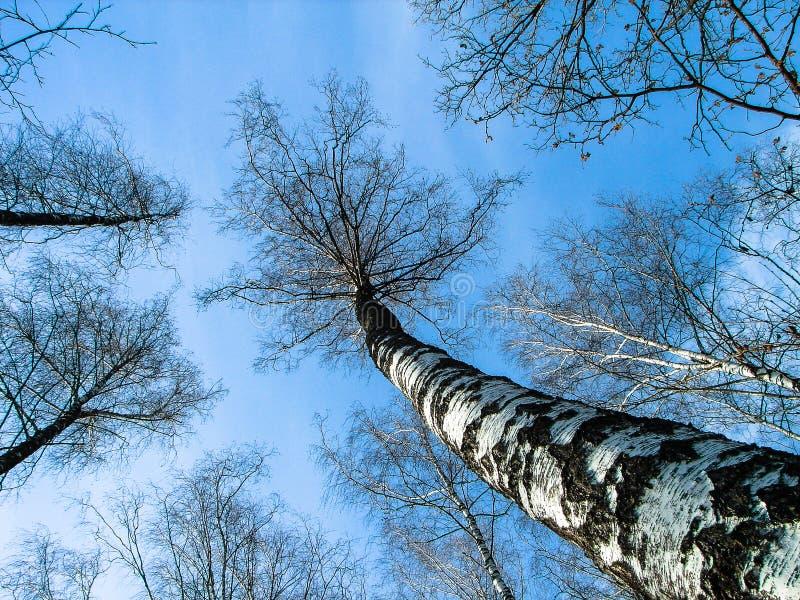 Paesaggio della primavera nella regione di Kaluga (Russia) immagine stock
