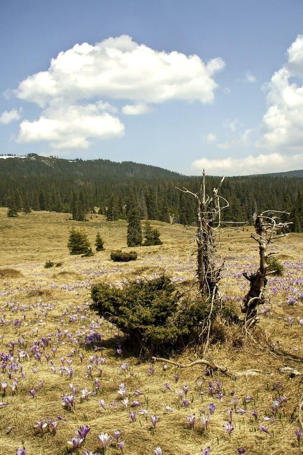 Paesaggio della primavera in Th Carpathians fotografia stock libera da diritti