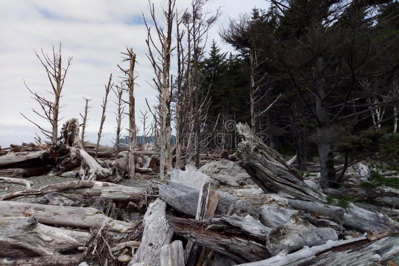 Paesaggio della seconda spiaggia al parco nazionale olimpico vicino a Seattle, Washington State fotografie stock libere da diritti