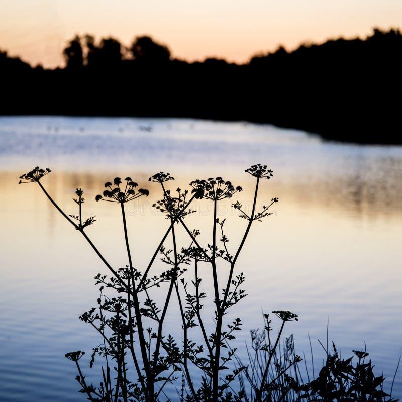 Download Paesaggio Della Siluetta Di Alba Di Fogliame Sul Lago Ad Alba Di Alba Immagine Stock - Immagine di lungo, nero: 55362157