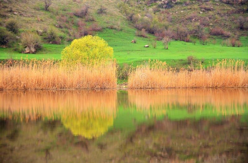 Paesaggio Della Sorgente Sul Fiume Fotografia Stock Libera da Diritti