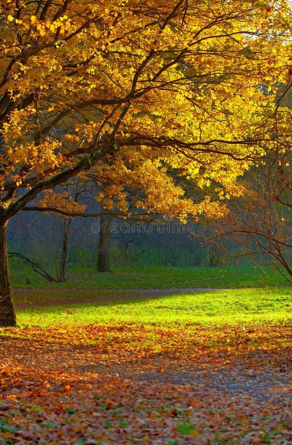 Paesaggio della sosta di autunno fotografia stock libera da diritti