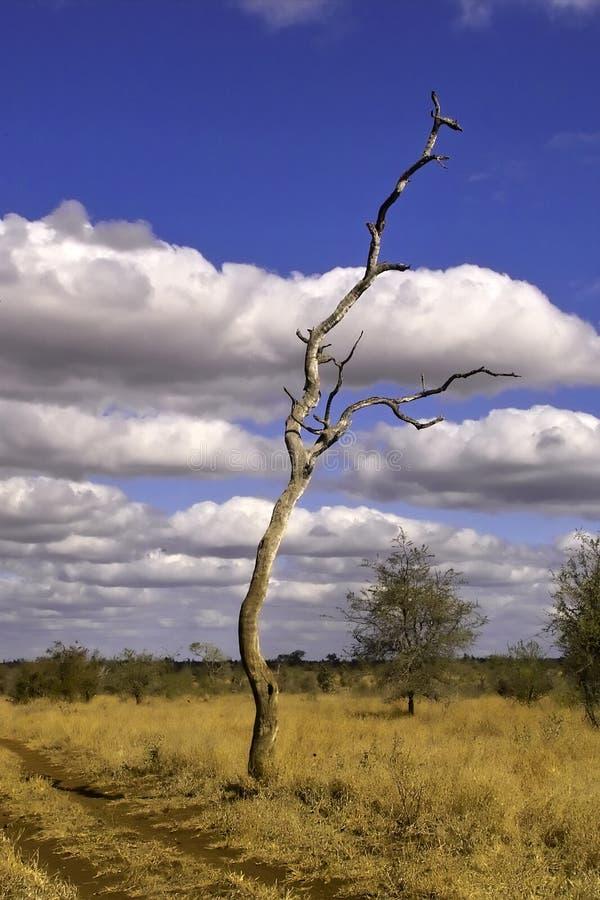 Paesaggio della sosta di Kruger fotografie stock