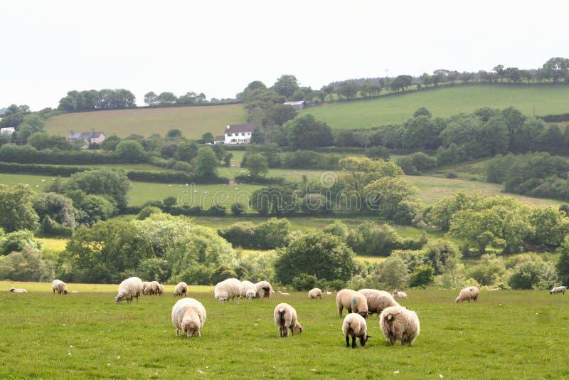 Paesaggio della sosta nazionale di Dartmoor fotografia stock libera da diritti