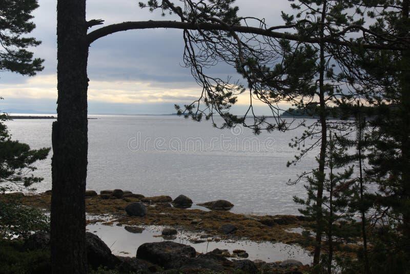 Paesaggio della spiaggia dell'isola della regione selvaggia degli alberi delle pietre immagine stock