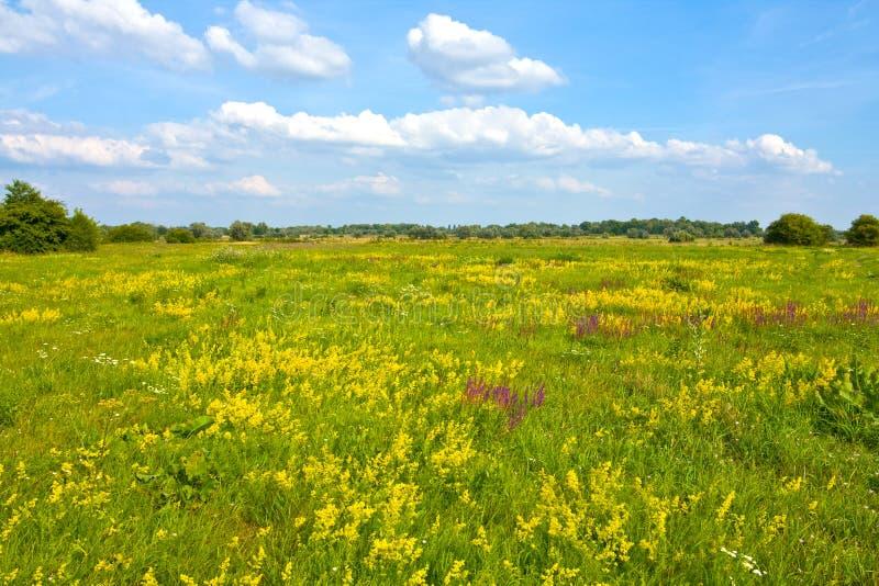 Paesaggio della steppa fotografie stock libere da diritti