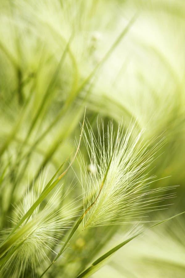 Paesaggio della steppa dell'erba immagine stock
