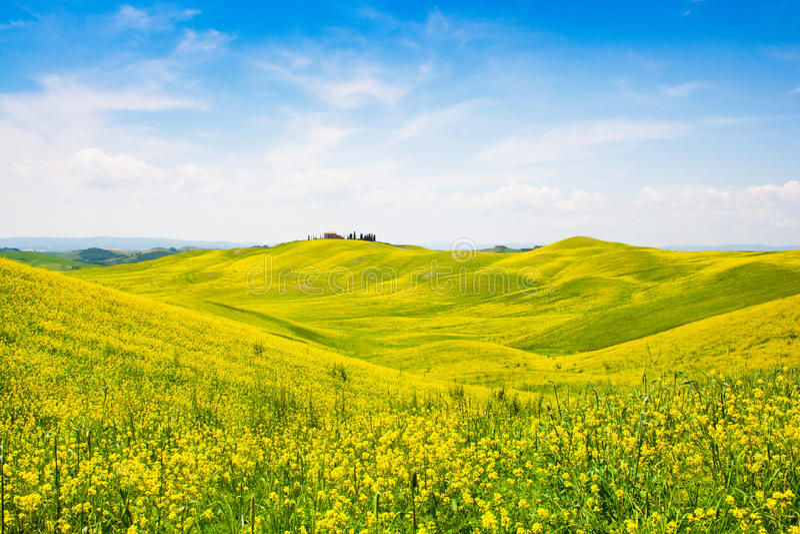 Paesaggio della Toscana con il campo dei fiori in Val d Orcia, Italia immagini stock libere da diritti