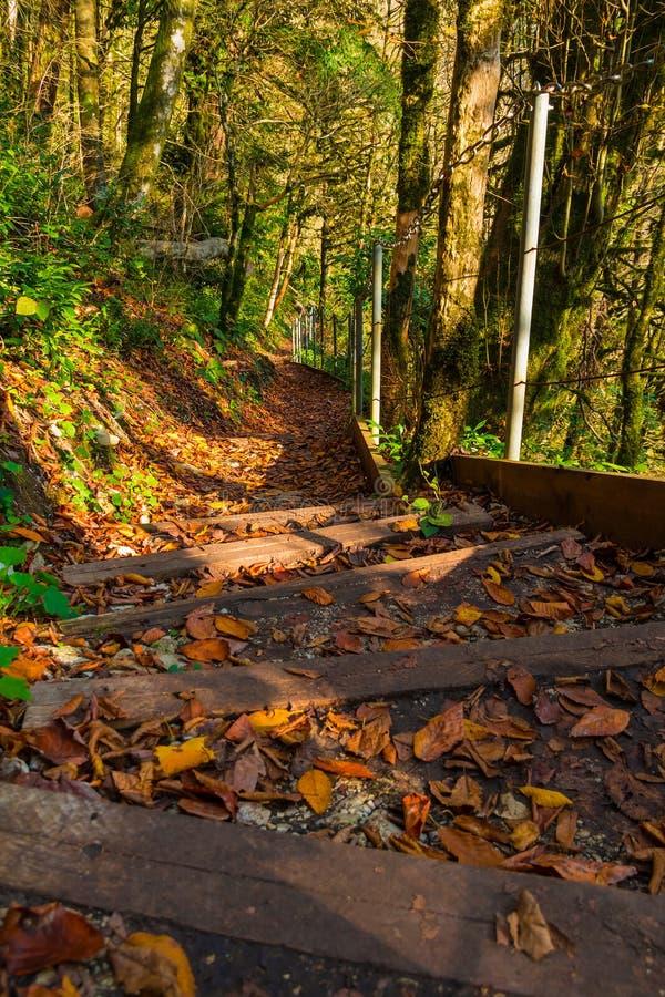 Paesaggio della traccia di montagna nel giorno soleggiato di autunno, Soci, Russia immagini stock libere da diritti