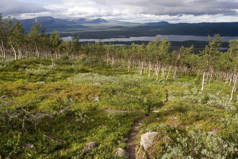 Paesaggio della tundra fotografia stock