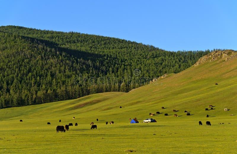 Paesaggio della valle di Orkhon fotografia stock libera da diritti