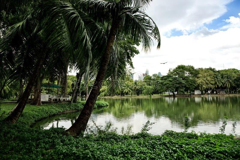 Paesaggio della vista della riva del lago con le palme nel parco di Lumphini in B fotografia stock libera da diritti