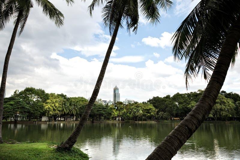Paesaggio della vista della riva del lago con le palme nel parco di Lumphini in B fotografia stock