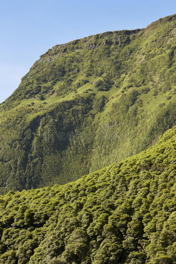 Paesaggio delle Azzorre nell'isola del Flores Vegetazione fertile verde Portug fotografie stock