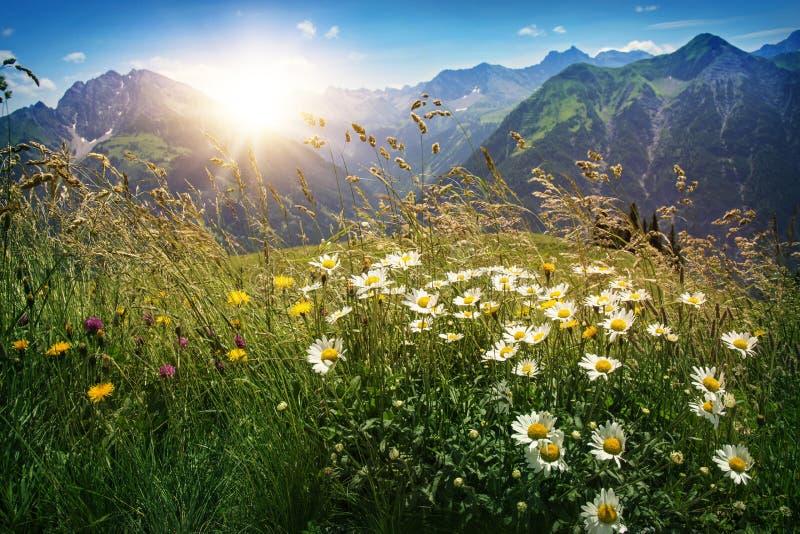 Paesaggio delle montagne in Vorarlberg fotografia stock libera da diritti
