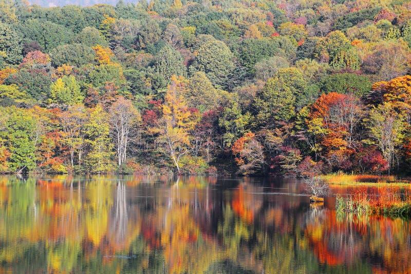 Paesaggio dello stagno di autunno Le zone umide protette hanno bagnato nel fogliame dorato di autunno e della luce fotografie stock