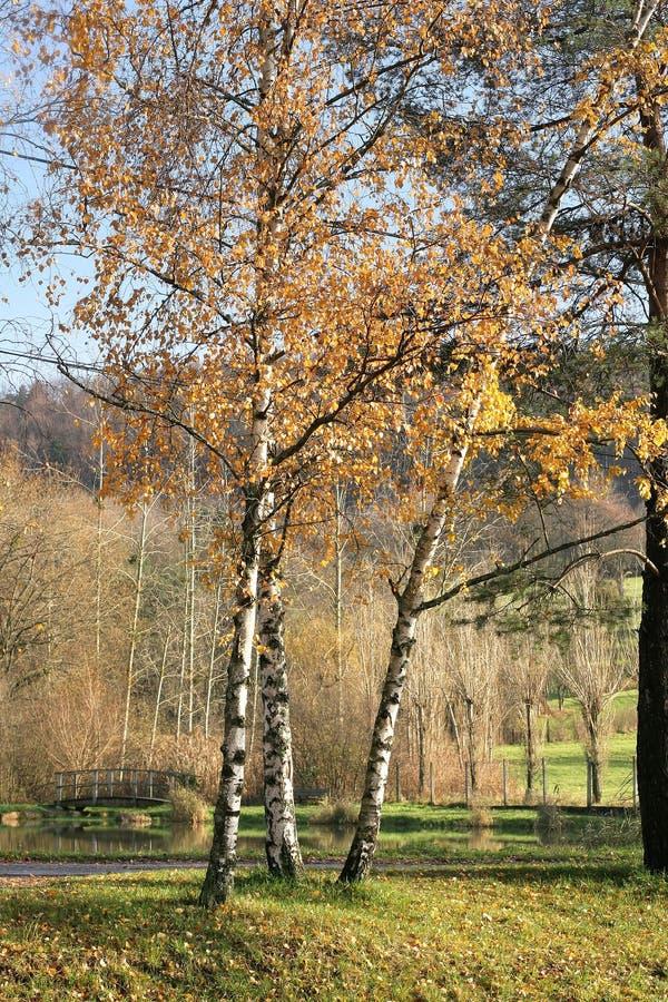 Paesaggio di Alsacian fotografia stock