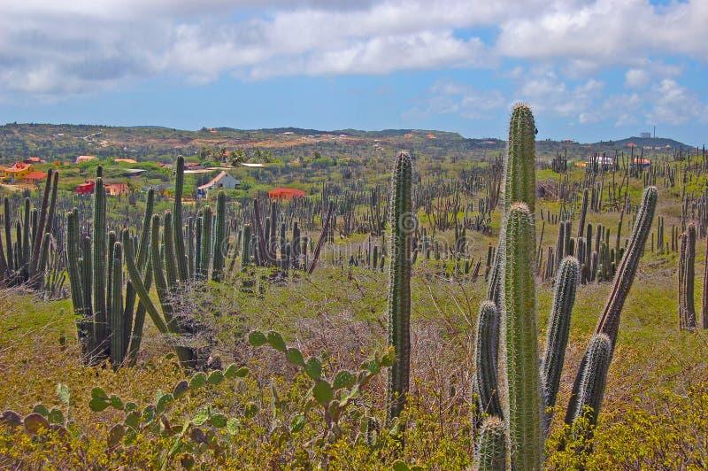 Paesaggio di Aruba immagine stock libera da diritti