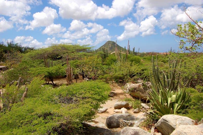 Paesaggio di Aruba fotografia stock libera da diritti