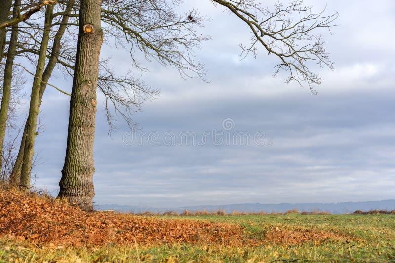 Paesaggio di Autum Campo con gli alberi dal lato della scena fotografie stock libere da diritti