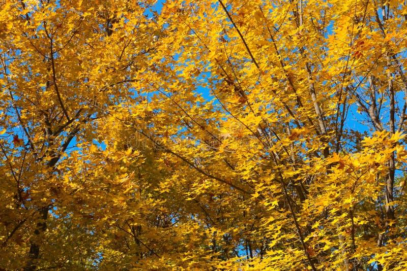 Paesaggiodi Autumnfotografia stock libera da diritti