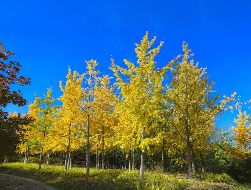Paesaggiodi Autumnimmagini stock libere da diritti