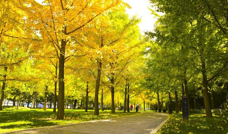 Paesaggiodi Autumnfotografia stock