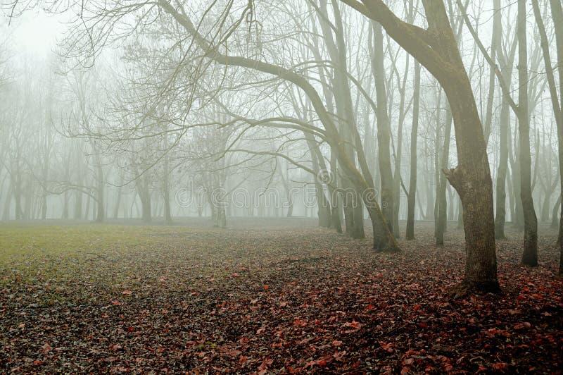 Paesaggio di Autumn November Parco nebbioso di autunno con le foglie di autunno asciutte di caduta immagini stock