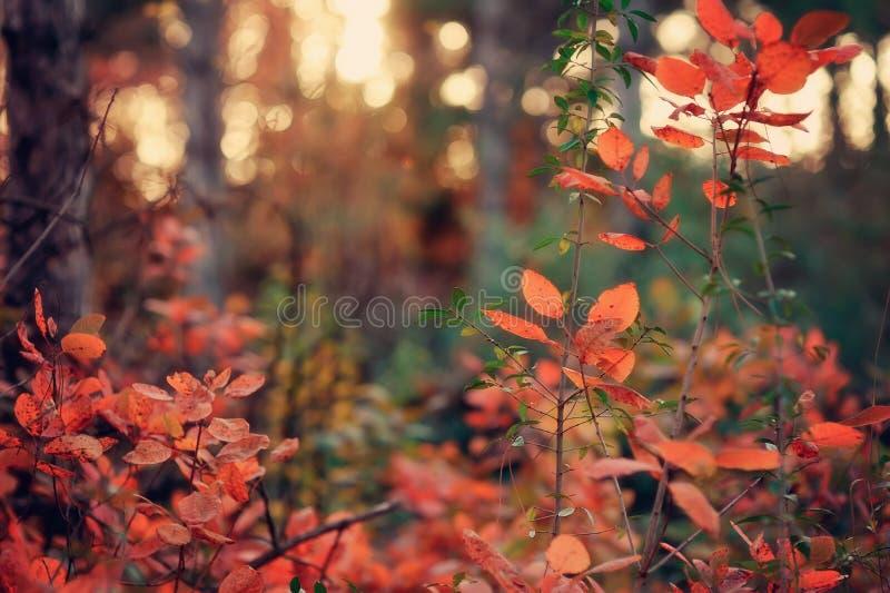 Paesaggio di autunno fotografie stock