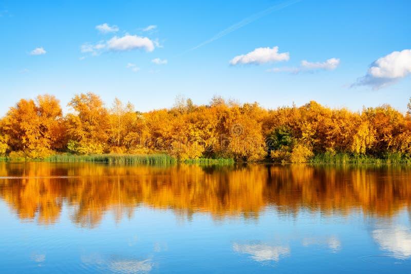 Paesaggio di autunno, alberi gialli delle foglie sulla sponda del fiume su cielo blu e fondo bianco delle nuvole il giorno solegg immagine stock
