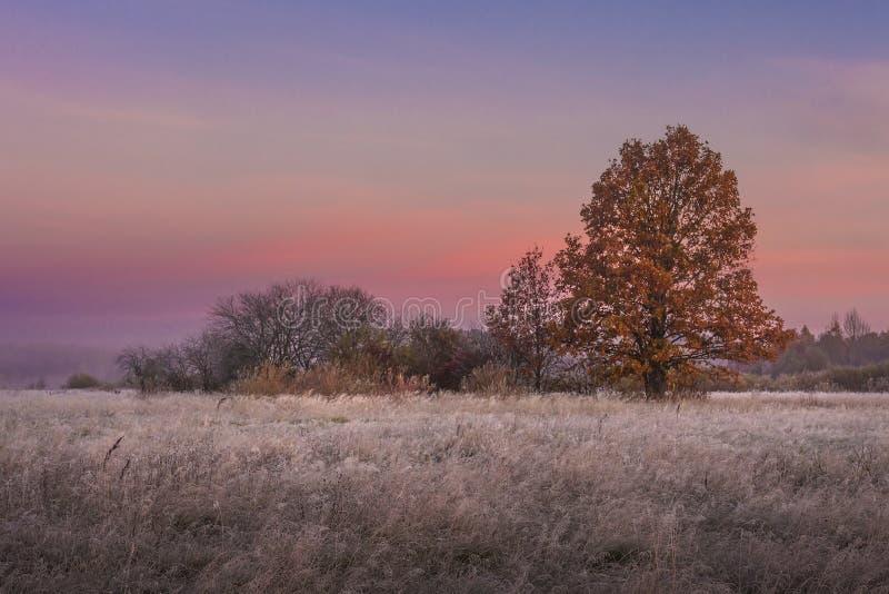 Paesaggio di autunno all'alba Alberi variopinti sul prato Caduta Autunno di paesaggio nel primo mattino con il bello cielo di col fotografia stock libera da diritti