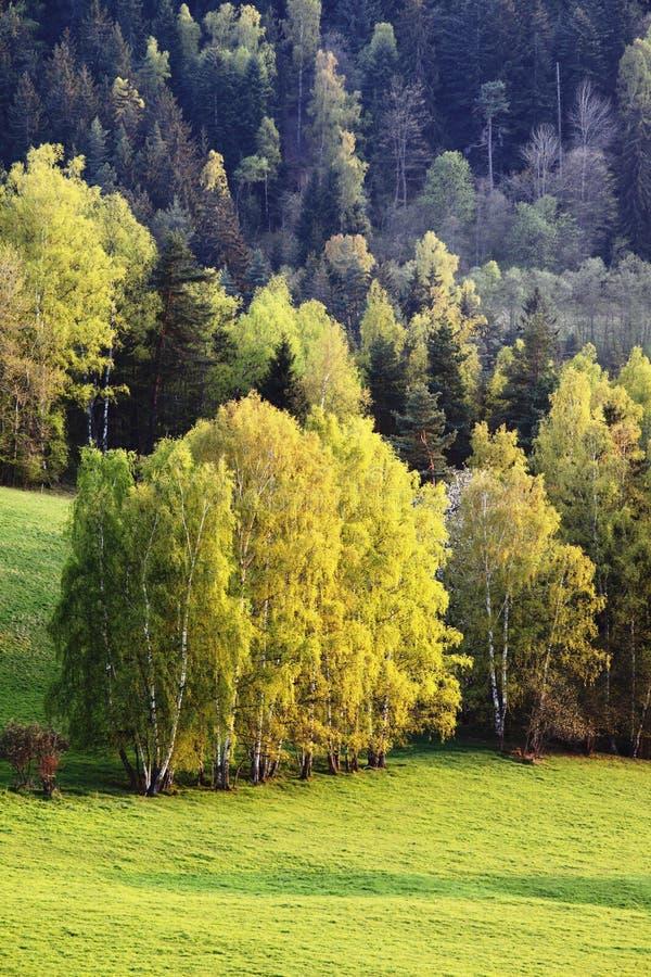 Paesaggio di paesaggio di autunno, bella foresta di panorama con l'erba gialla e verde di luce solare di sera, sole, ambiente nat immagini stock