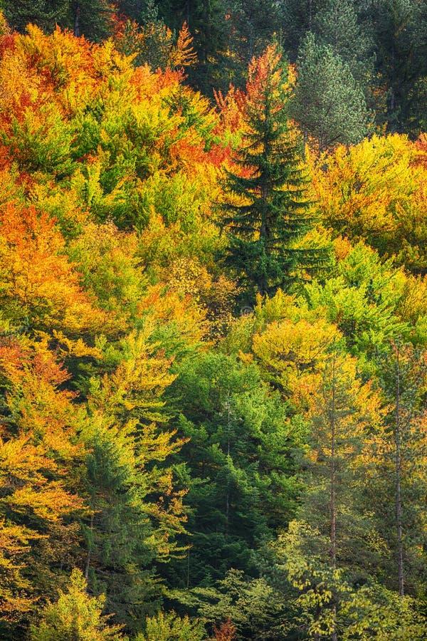 Paesaggio di autunno con gli alberi nella foresta fotografia stock libera da diritti