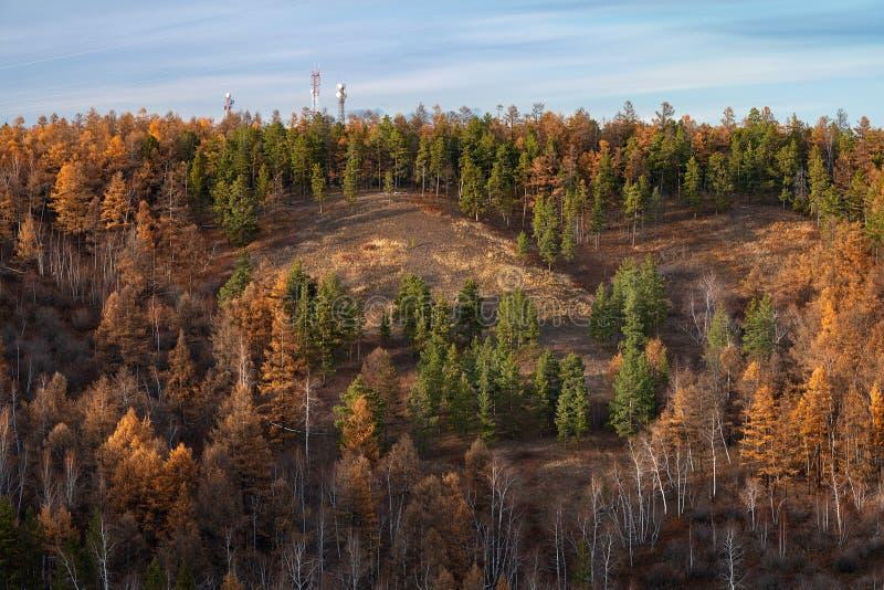 Paesaggio di autunno con gli alberi immagini stock