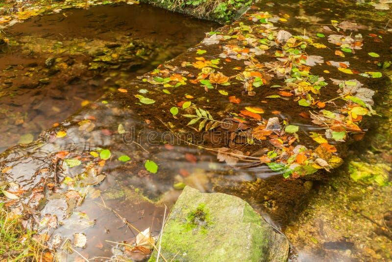 Paesaggio di autunno con il fiume della montagna che passa fra le pietre muscose per la corrente liscia serica della foresta vari fotografie stock libere da diritti
