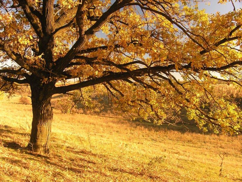 Paesaggio di autunno con l'albero 2 fotografia stock libera da diritti