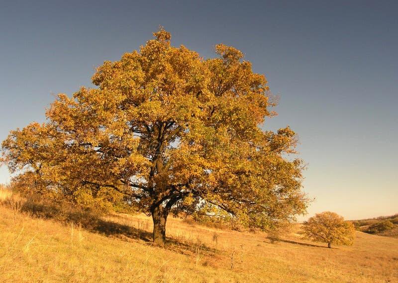Paesaggio di autunno con l'albero immagine stock libera da diritti