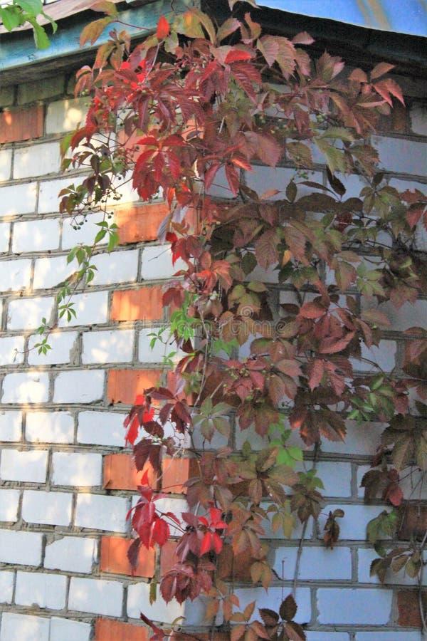 Paesaggio di autunno con l'uva immagini stock