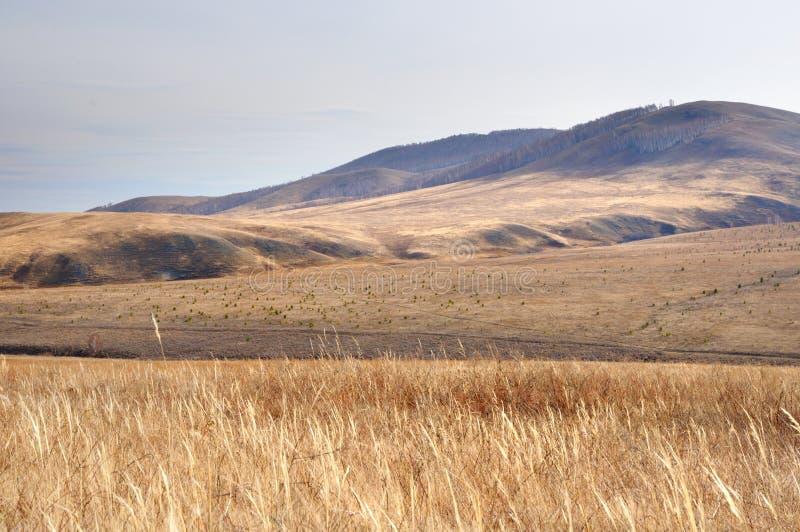 Paesaggio di autunno con le colline delicate coperte di erba gialla di autunno con le ombre profonde nella lampadina luminosa dur fotografie stock