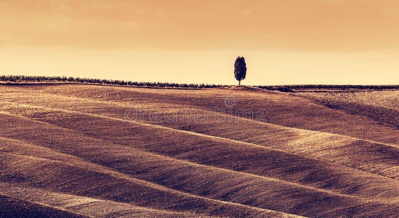Paesaggio di autunno dei campi della Toscana, panorama, Italia Stagione della raccolta fotografia stock
