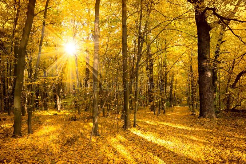 Paesaggio di autunno dell 39 oro con luce solare ed i raggi - Specchi riflettenti luce solare ...