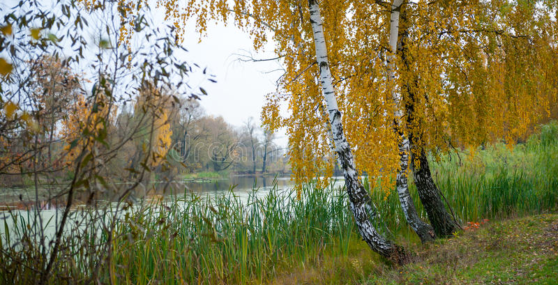 Paesaggio di autunno della betulla e di uno stagno fotografia stock