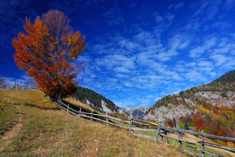 Paesaggio di autunno della montagna immagine stock libera da diritti