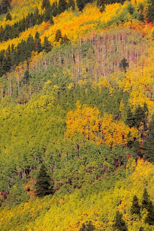 Paesaggio di autunno di Colorado immagine stock