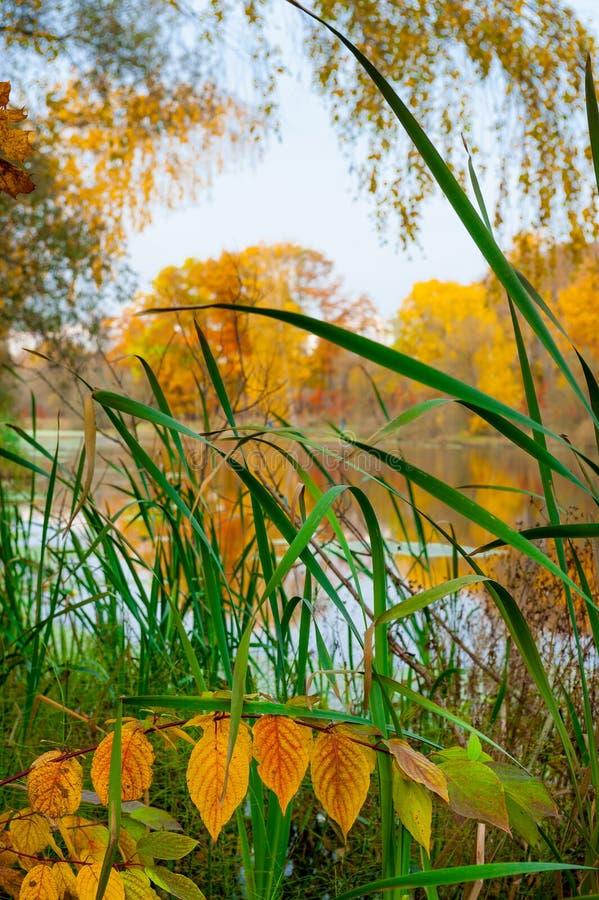 Paesaggio di autunno di un fiume immagine stock libera da diritti