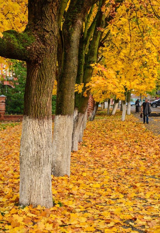 Paesaggio di autunno in Europa fotografia stock