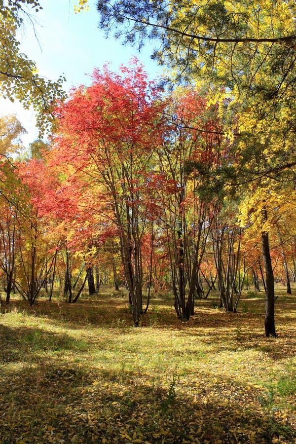 Download Paesaggio Di Autunno - Foresta Mista Immagine Stock - Immagine di betulla, vista: 55358345