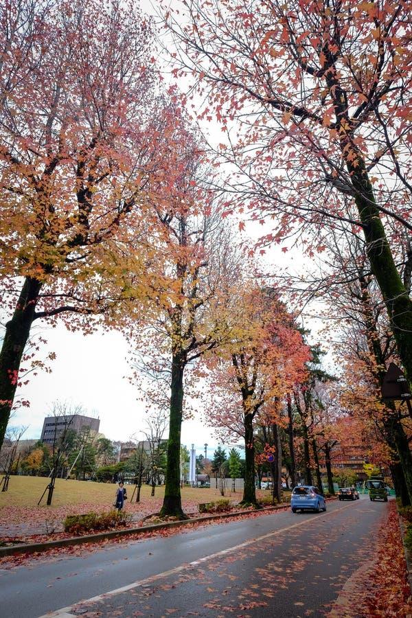 Paesaggio di autunno a Kyoto, Giappone fotografie stock libere da diritti